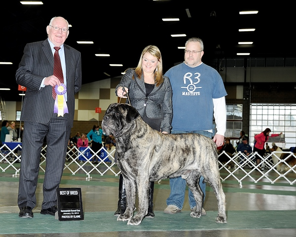 BOB at 2014 Sammamish Kennel Club